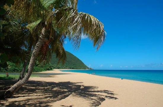 Vanille plage grande anse