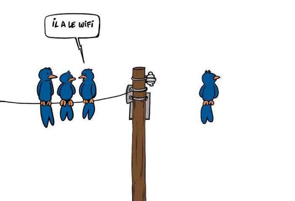 Wifi Bird