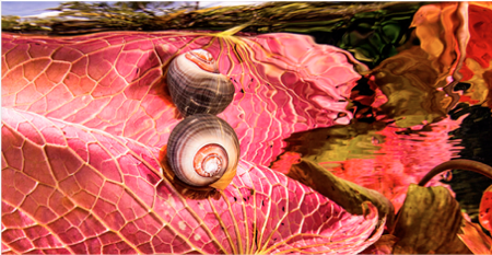 SWPA 2014 Escargot